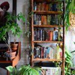 Find The Best DIY Ideas For Your Indoor Gardens