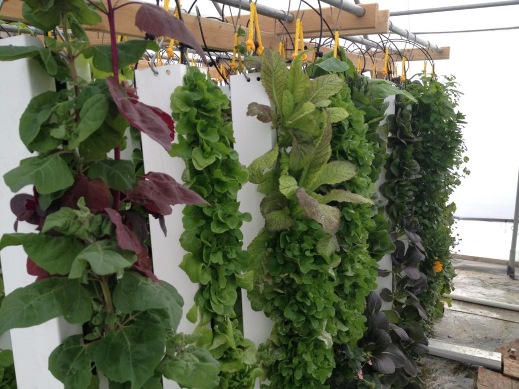 Ideas to Help Build a Spacing Saving Vertical Gardens